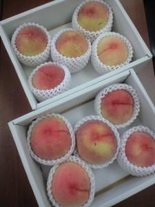 りっぱな桃をいただいてしまいました。ありがとうございます~